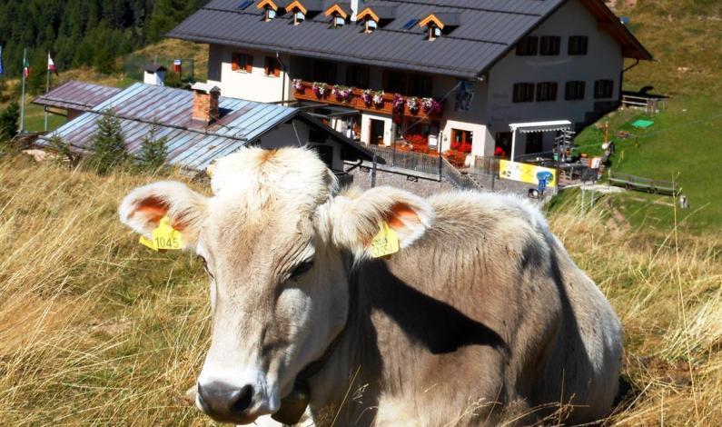 Val di Fiemme – ideální dovolená v zimě i létě