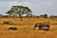 Divoký, nespoutaný, a přesto krásný národní park Serengeti