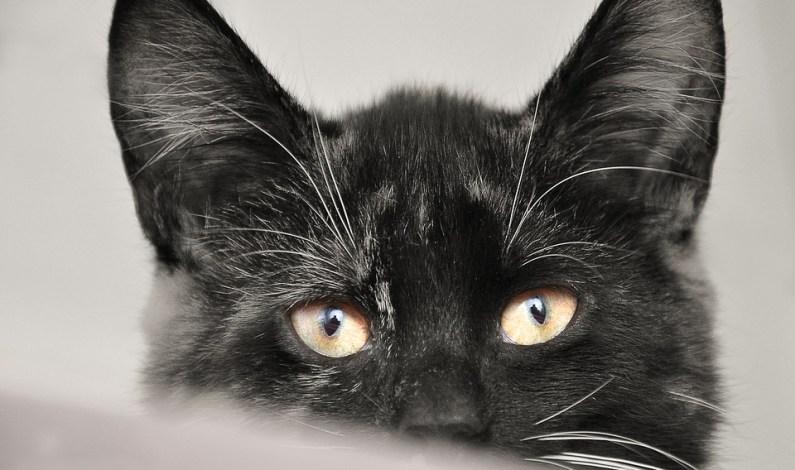 Kočka, kterou sleduje celý svět na @FelixHuddersfieldStationCat