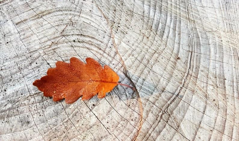 Dřevo jako skvělá výzdoba podzimu