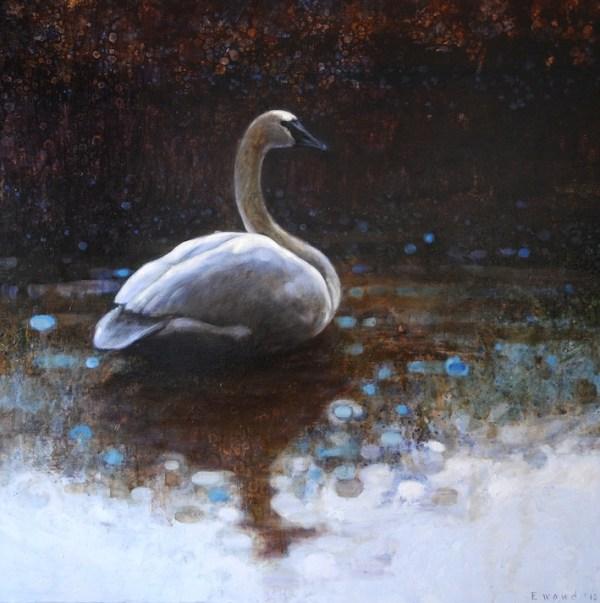 ewoud-de-groot-wildlife-resting-swan-2012