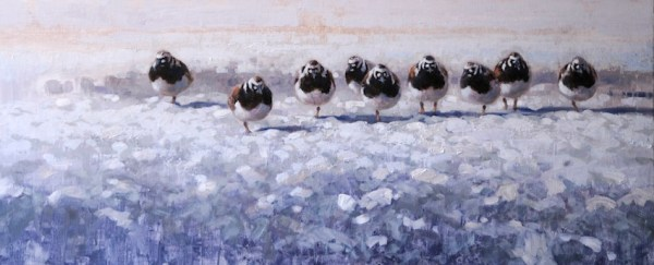 ewoud-de-groot-wildlife-turnstones-2013
