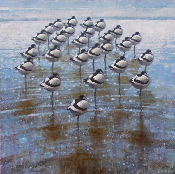 ewoud-de-groot-wildlife-resting-avocets07