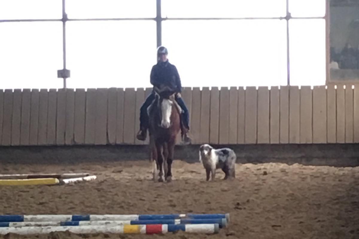 Horse and Dog Trail Übungsturnier