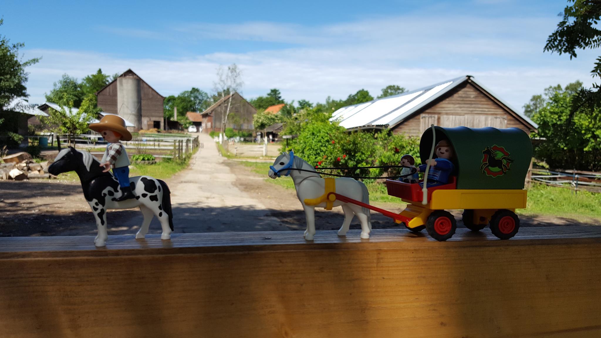 """Seminar """"Unterwegs mit Pferd"""""""