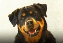 Top 10 Dog Training Tips