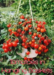Next Spring Grow Your Tomatoes in Hanging Baskets