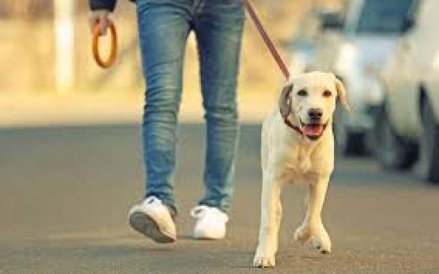 startup ideas dog walking