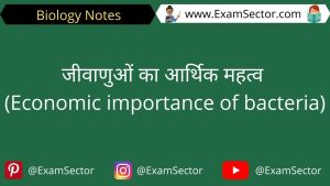 Economic importance of bacteria Notes in Hindi