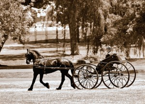 "Can a horse-drawn carriage be ""logical""?"