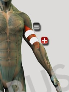 biceps1ch2e