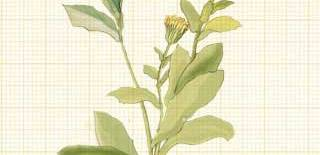 Que sabe sobre los productos herbarios