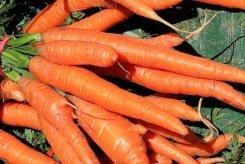 Alfacarotenos para la longevidad
