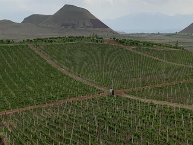 Perspective sur les vignobles à perte de vue (c) M.L.
