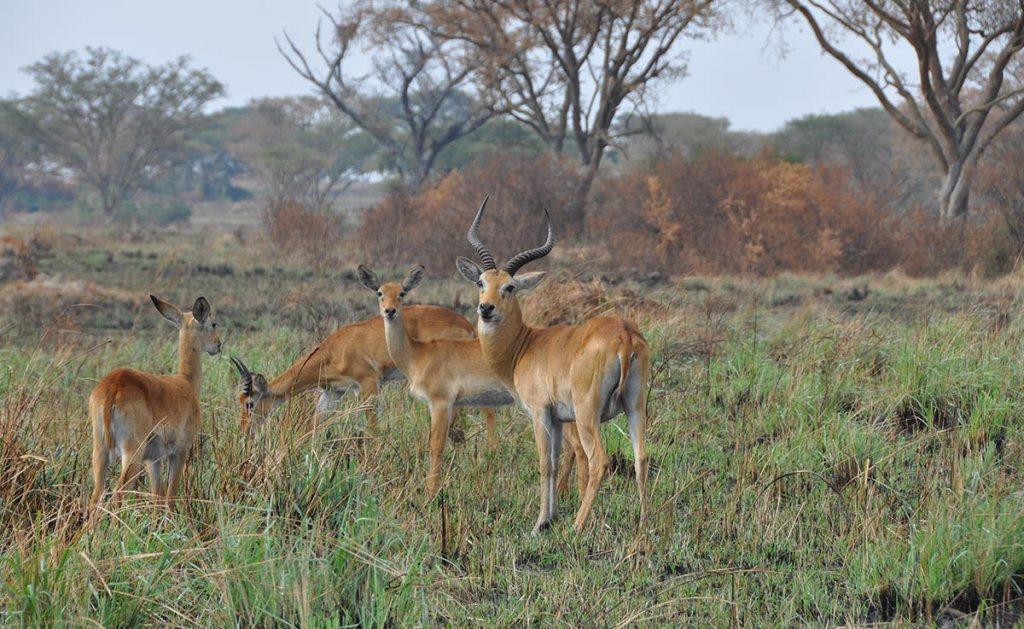 Mweya Peninsula in queen elizabeth national park