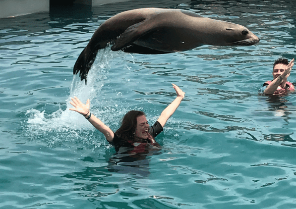 GALERIA-SWIMMING-WITH-SEA-LIONS-3