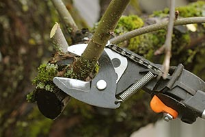 Pruning and Removal - Executive Outdoor Living   Omaha, NE on Executive Outdoor Living id=46531