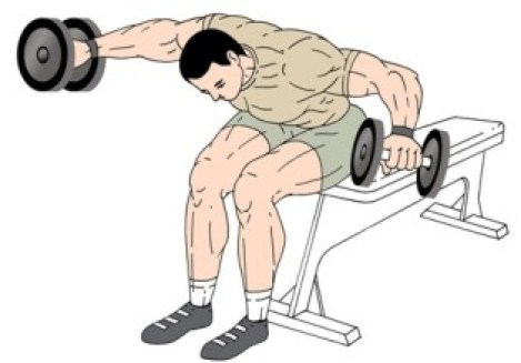 Image result for Seated Bent-Over Rear Deltoid Raise