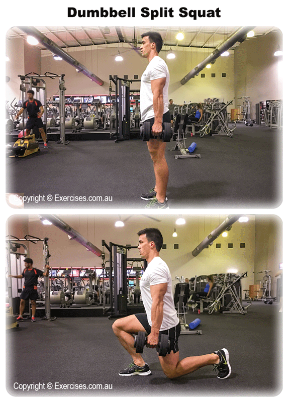 Dumbbell Split Squat Exercises Com Au