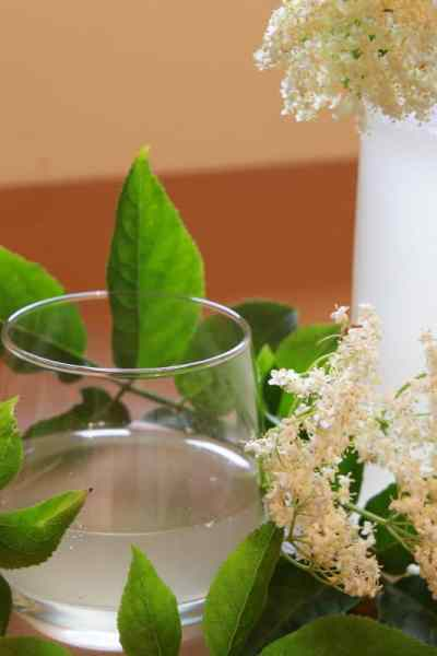 limonade de fleurs de sureau noir