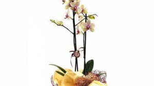 Orchidea lutto – Exhibition