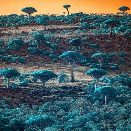 Ziryab Alghabri, Socotra Yemen, Menzione d'onore nella categoria Landscape
