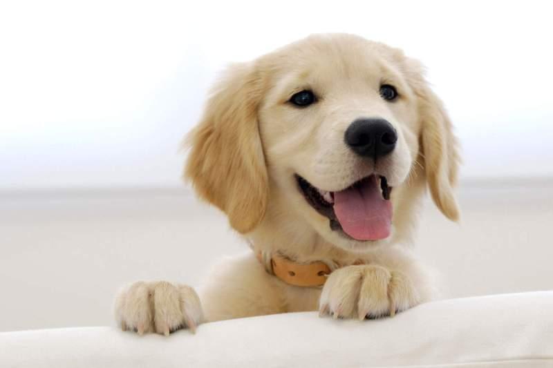 Pies w domu – Jak zadbać o porządek