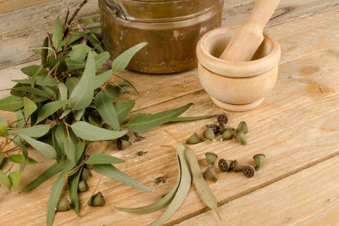 Zdrowy miód i olejek eukaliptusowy