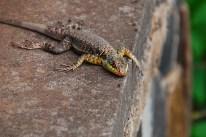 Gecko an der Kante