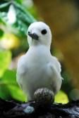 Angry Bird?! Mit Ei!!!