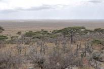 Between Ngorogoro and Serengeti