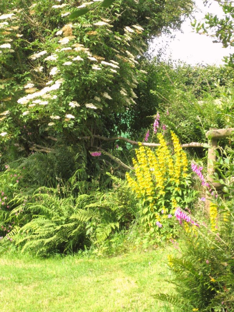 Summer colour at West Withy Farm in July 2013