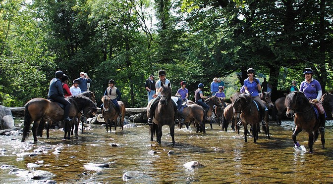 The 2014 Exmoor Pony Festival