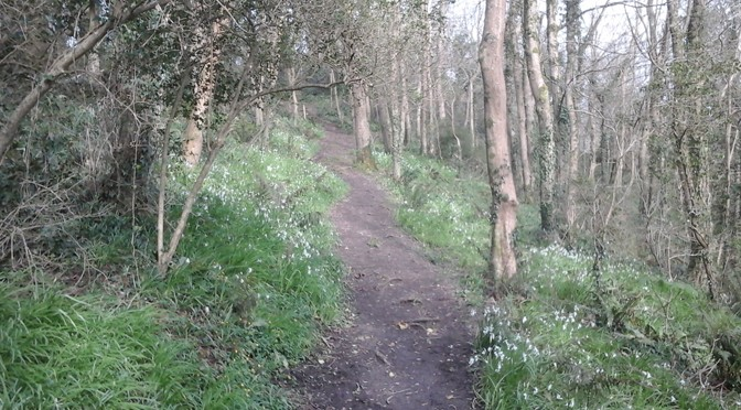 LOCAL NATURE RESERVE STATUS AWARDED TO CAIRN WOODLAND, ILFRACOMBE