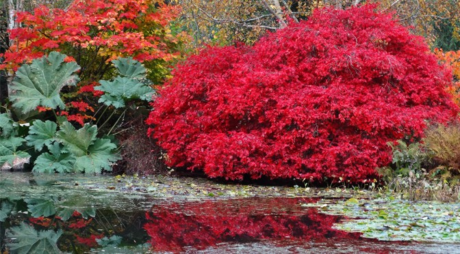 CHARITY OPEN DAY AT RHS ROSEMOOR