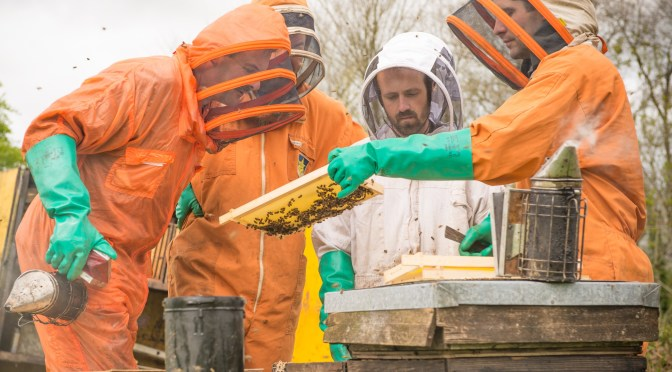 BEEKEEPING EXPERIENCE DAYS AT QUINCE HONEY FARM