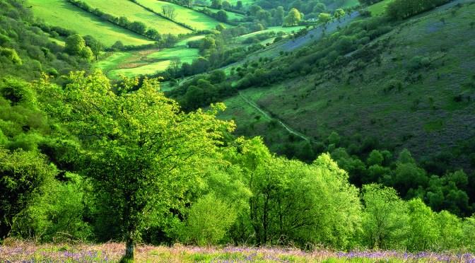 WILD GARDENS: MY BLUEBELL HEAVEN