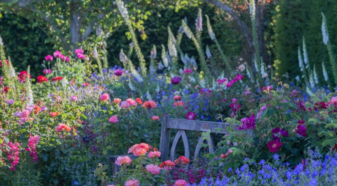 ROSE FESTIVAL FOLLOWED BY AUGUST FLOWER SHOW AT RHS ROSEMOOR