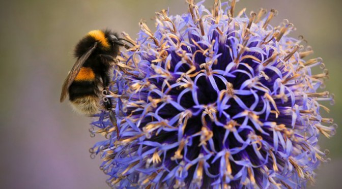 ONE WEEK TO GO: SOMERSET WILDLIFE TRUST CROWDFUNDING CAMPAIGN TO CREATE A BUZZ AROUND BEES