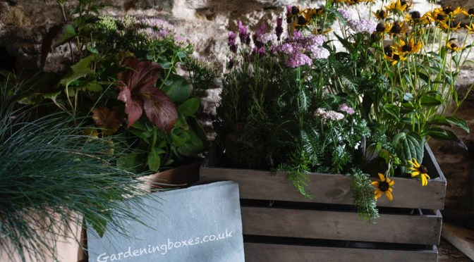 NEW SUBSCRIPTION GARDEN PLANT SERVICE ON EXMOOR