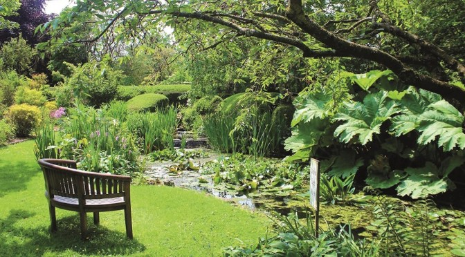 GLORIOUS SOMERSET GARDENS OPEN TO HELP ST MARGARET'S HOSPICE
