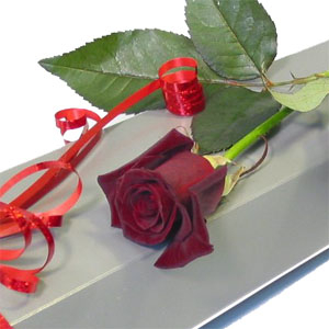 Special Red Rose