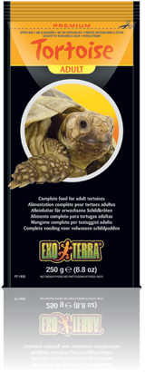Tortoise Adult