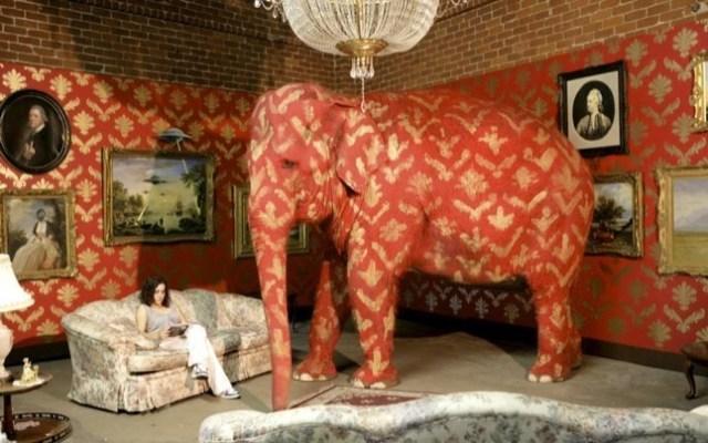 https://i1.wp.com/www.exopermaculture.com/wp-content/uploads/2011/08/elephantinroom.jpg?w=640