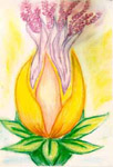 Crown_Lotus