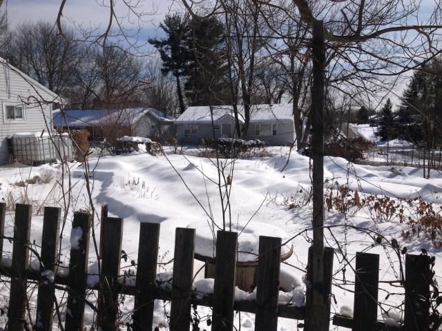 GANG garden winter