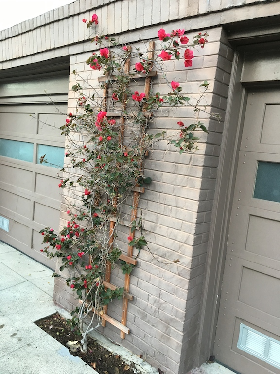 wall-flowers
