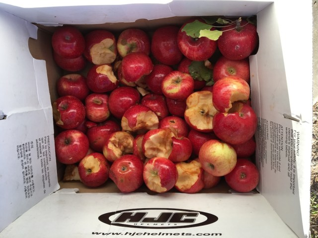 apples-in-box
