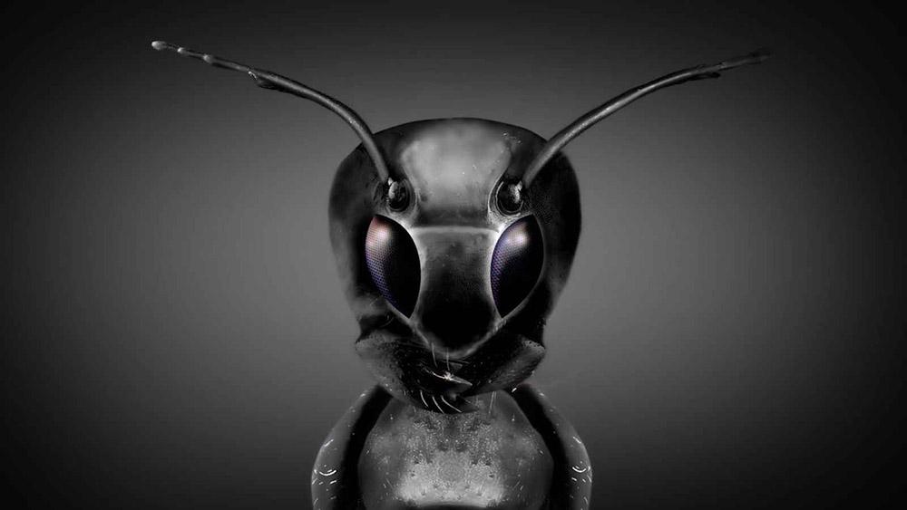 Инопланетяне  работают с людьми в секретных программах ВВС США . МАЙКЛ САЛЛА  7 ИЮЛЯ 2018 ГОДА 3_ant_person-1000