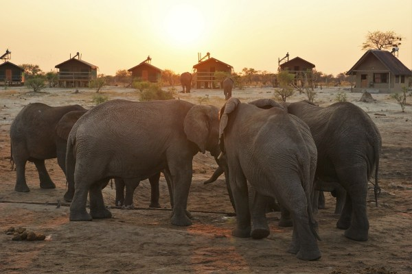 elephant-sandselephants-sands-2